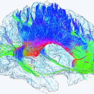 Mehr zu 'Neuroscience: From Structure to Function and Back'