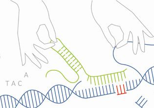 Mehr zu 'Genome Editing in Germany and Korea'