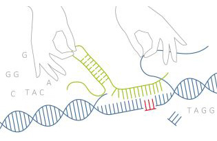 Genome editing in human cells
